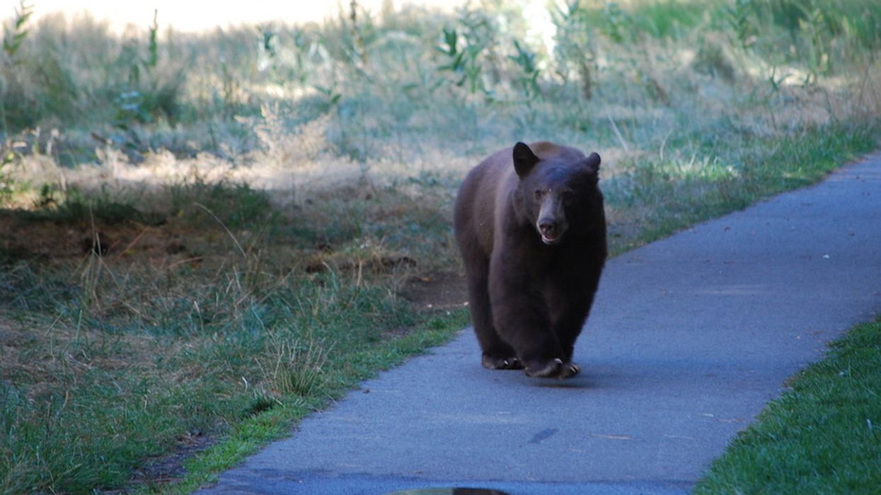 Wild Bears 'Having a Party' in Coronavirus-Closed Yosemite National Park