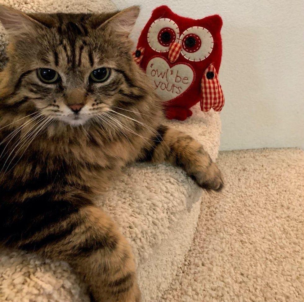 cat, tabby, fluffy, Lulu