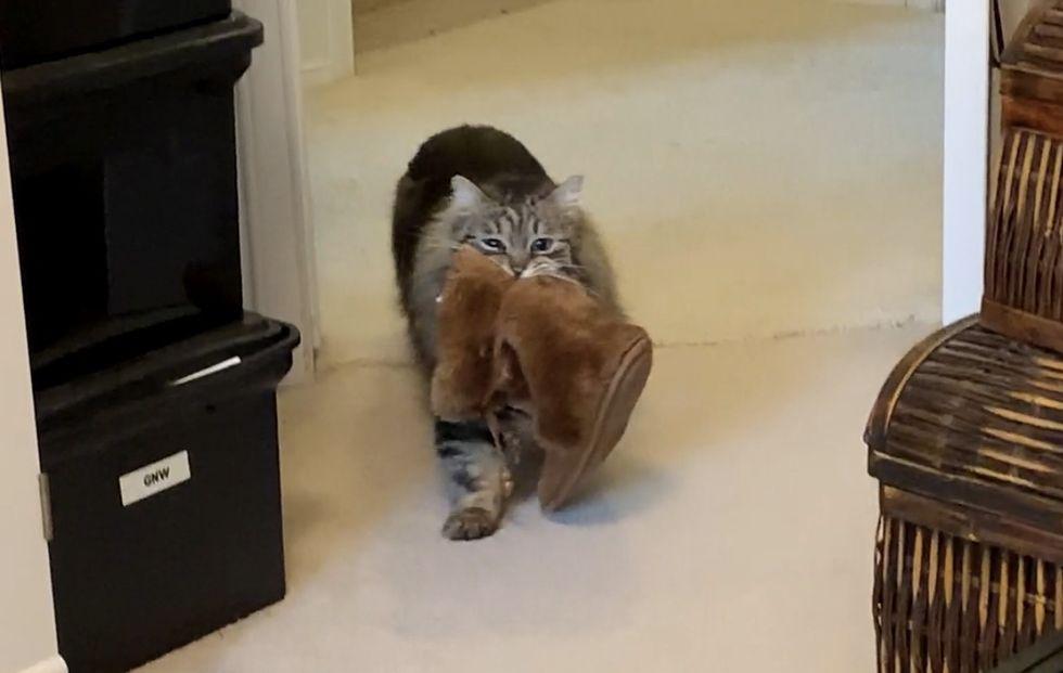 cat, brings, slippers, morning, Lulu