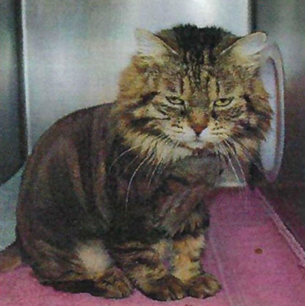 cat, shelter, adopt, Lulu