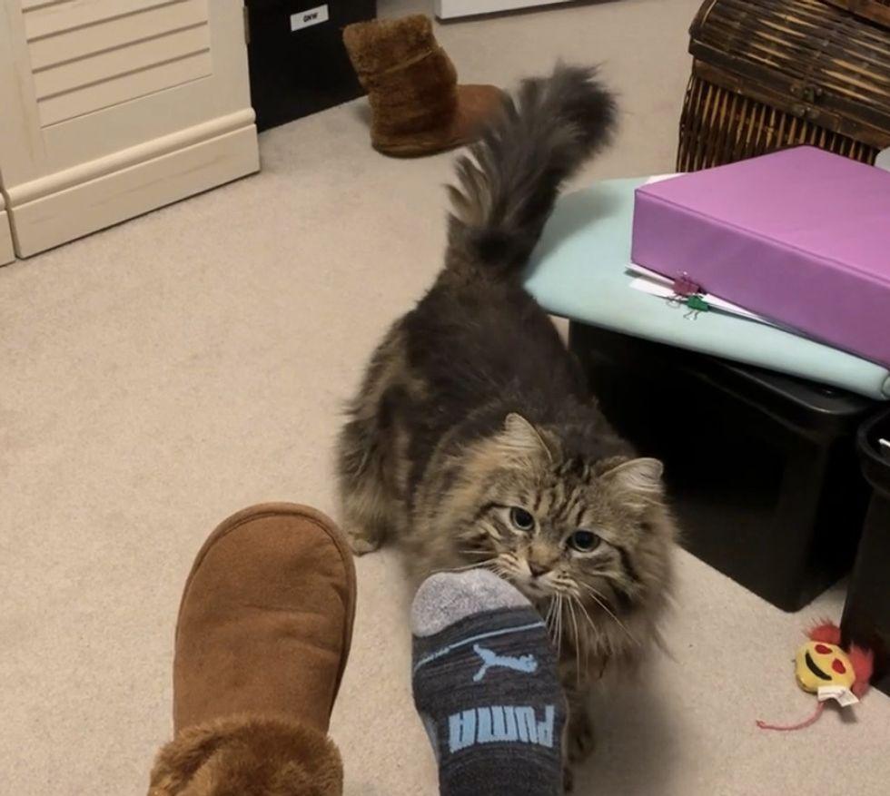 cat, brings, slippers, morning