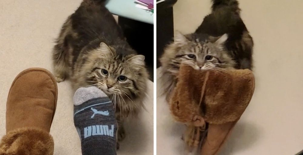 Cat So Happy to Be Adopted, She Brings Slippers to Her Human Every Morning