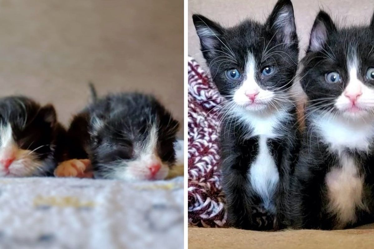 Twin Kittens Never Leave Each Other's Side After Being Found Together in a Storm