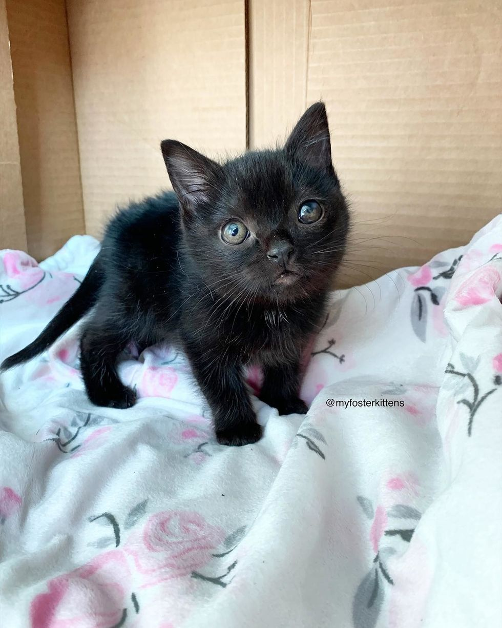 img Wobbly Kitten So Happy to Be Loved She Thanks Rescuer with Cutest Silent Meows
