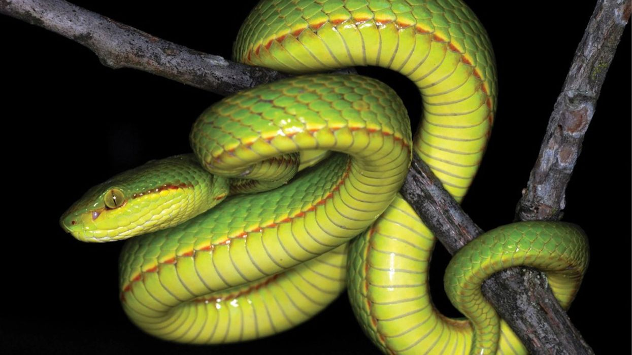 Scientists Name New Snake After Harry Potter's Salazar Slytherin