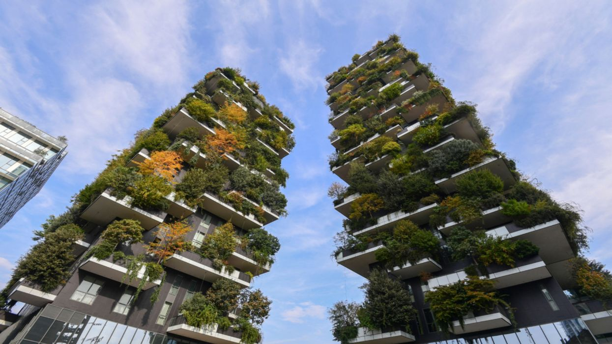 The Urban Forest of the Future: How to Turn Cities Into Treetopias