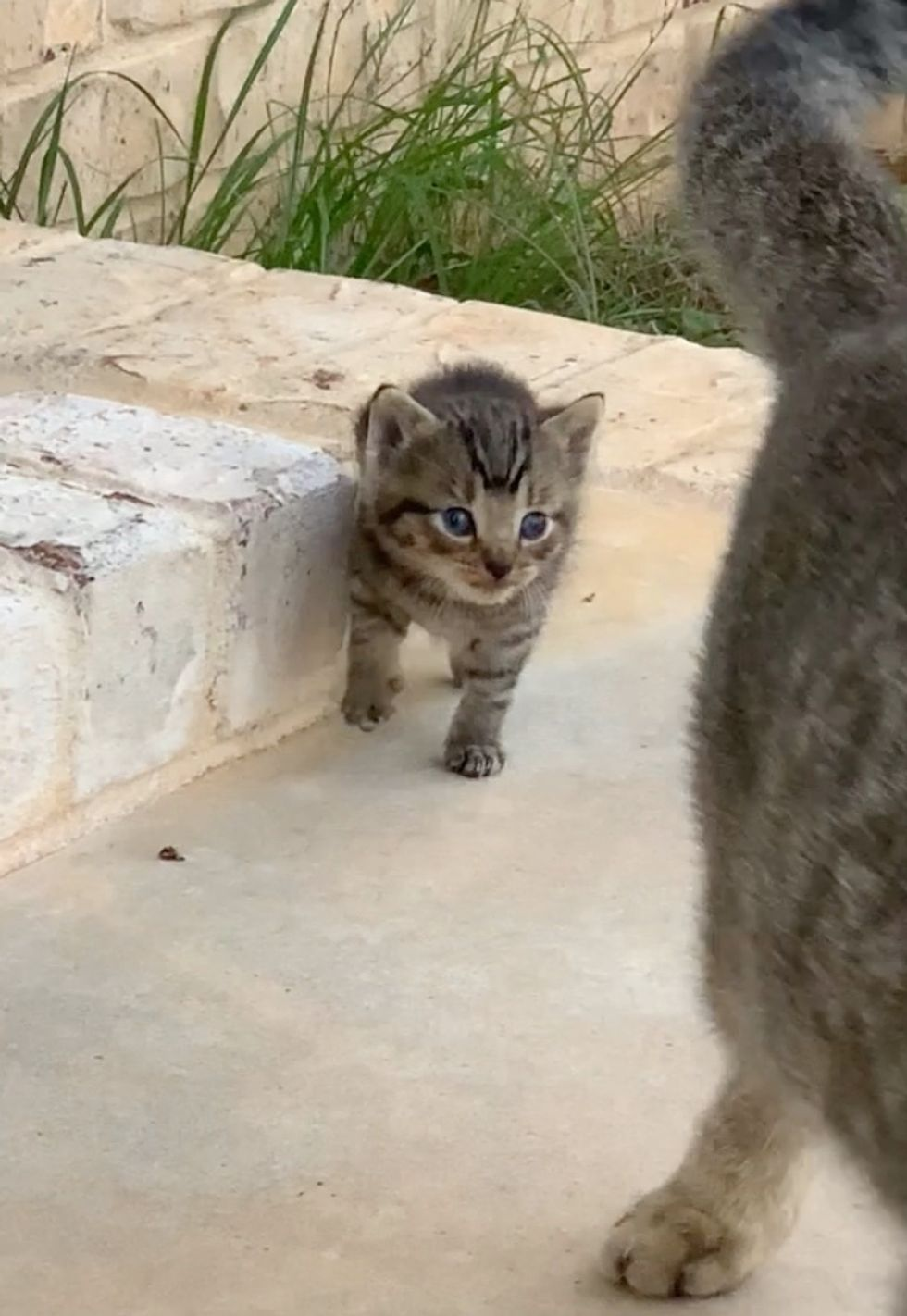 img Stray Cat Befriends a Couple and Decides to Bring Her Kitten to Them