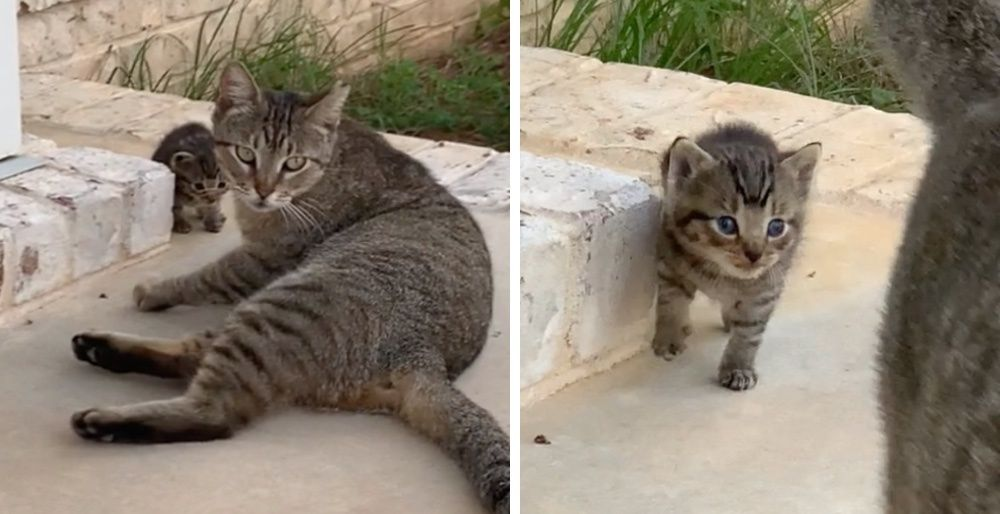 Stray Cat Befriends a Couple and Decides to Bring Her Kitten to Them