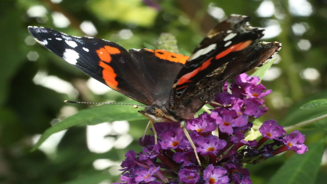 Insect Populations on Land Are Down 25%, Study Shows