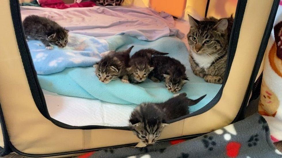 tabby, kitten, cat, cat mom, cute, walk