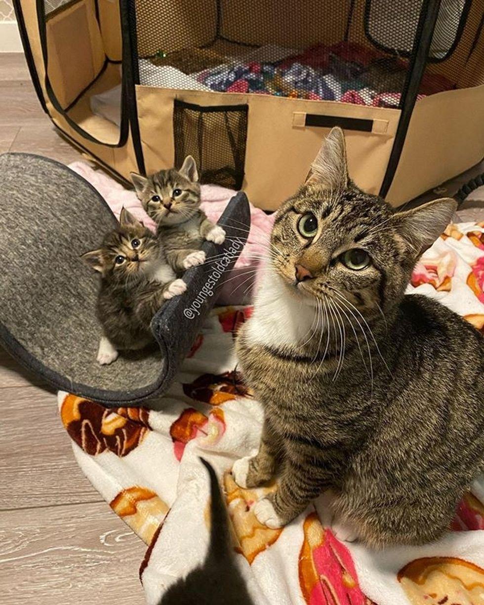 tabby, kitten, cat, cat mom, cute