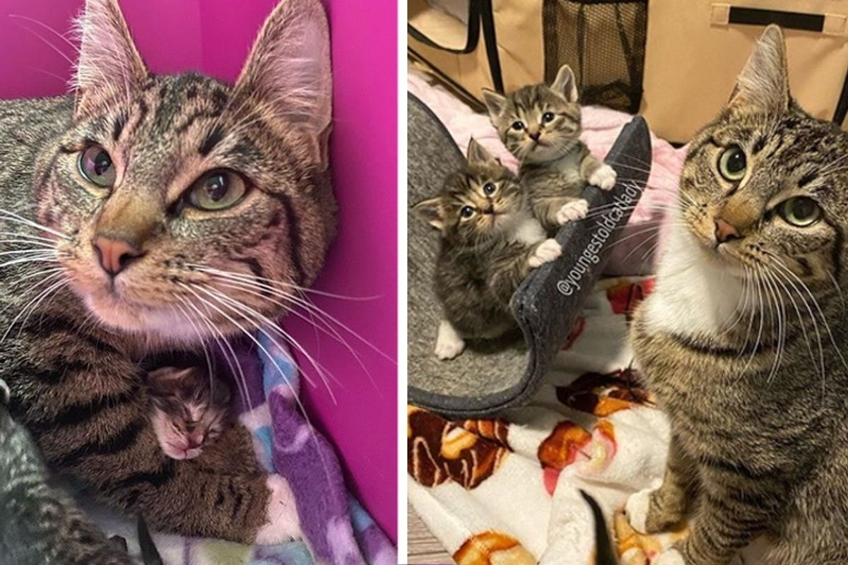 Stray Cat Walks into Apartment to Have Kittens and Gets Help Just in Time