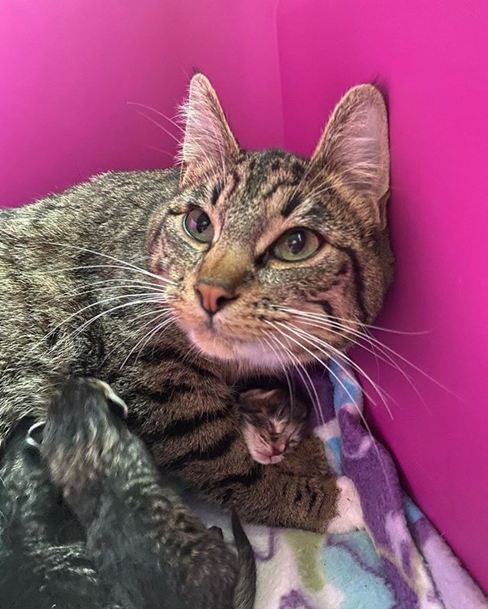 tabby, kitten, cat, cat mom, cute, hug