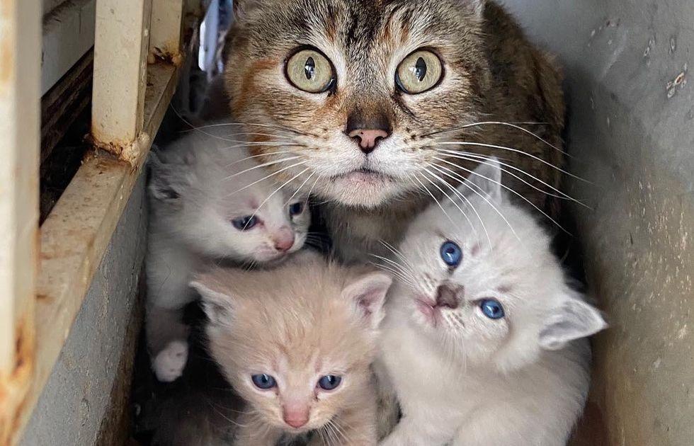 rescue, kitten, feral, cat, mom