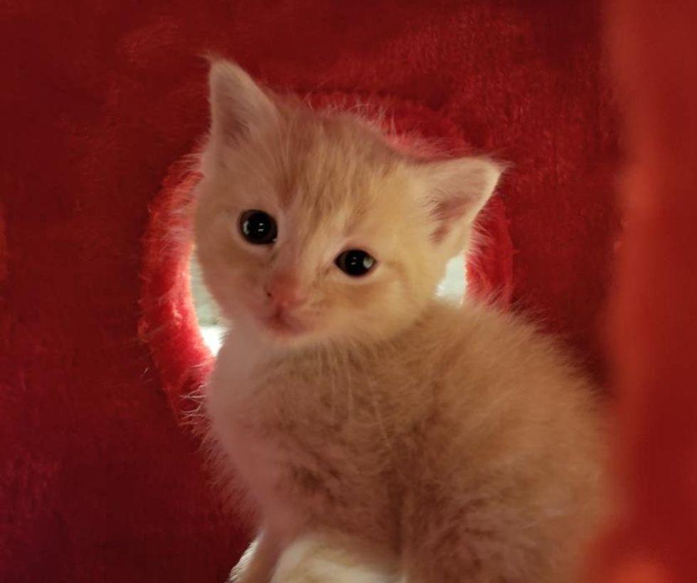 cute, kitten, playful, ginger