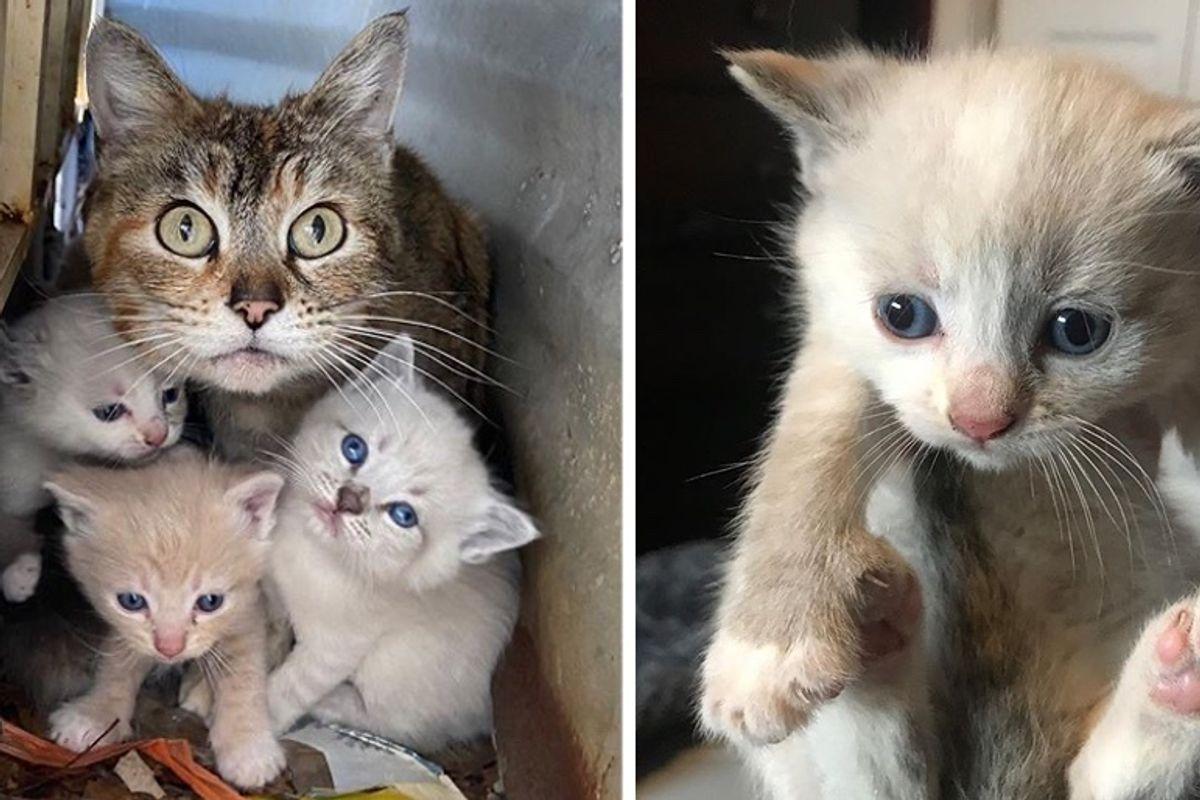 Cat Shields Her Kittens in Backyard Until Help Arrives