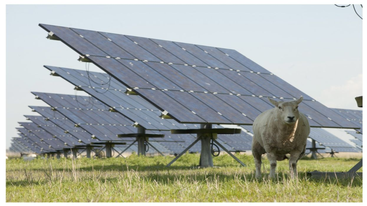 A New Vision for Farming: Chickens, Sheep, and ... Solar Panels