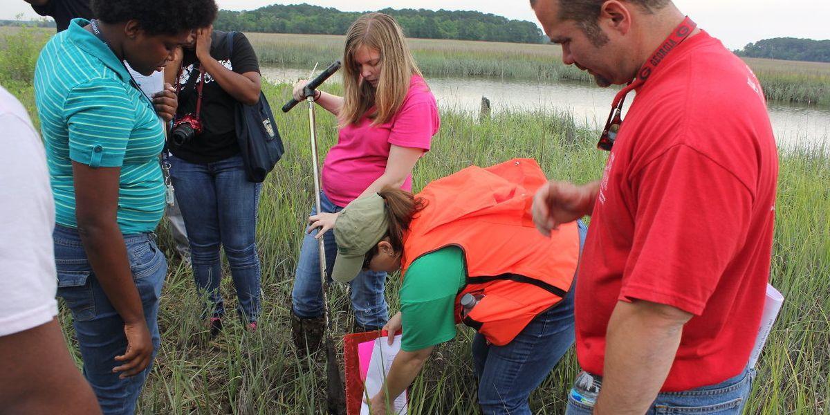 Wetland testing