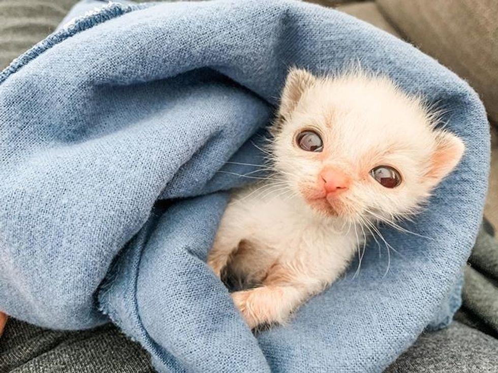 cute, kitten, tiny, small, big eyes