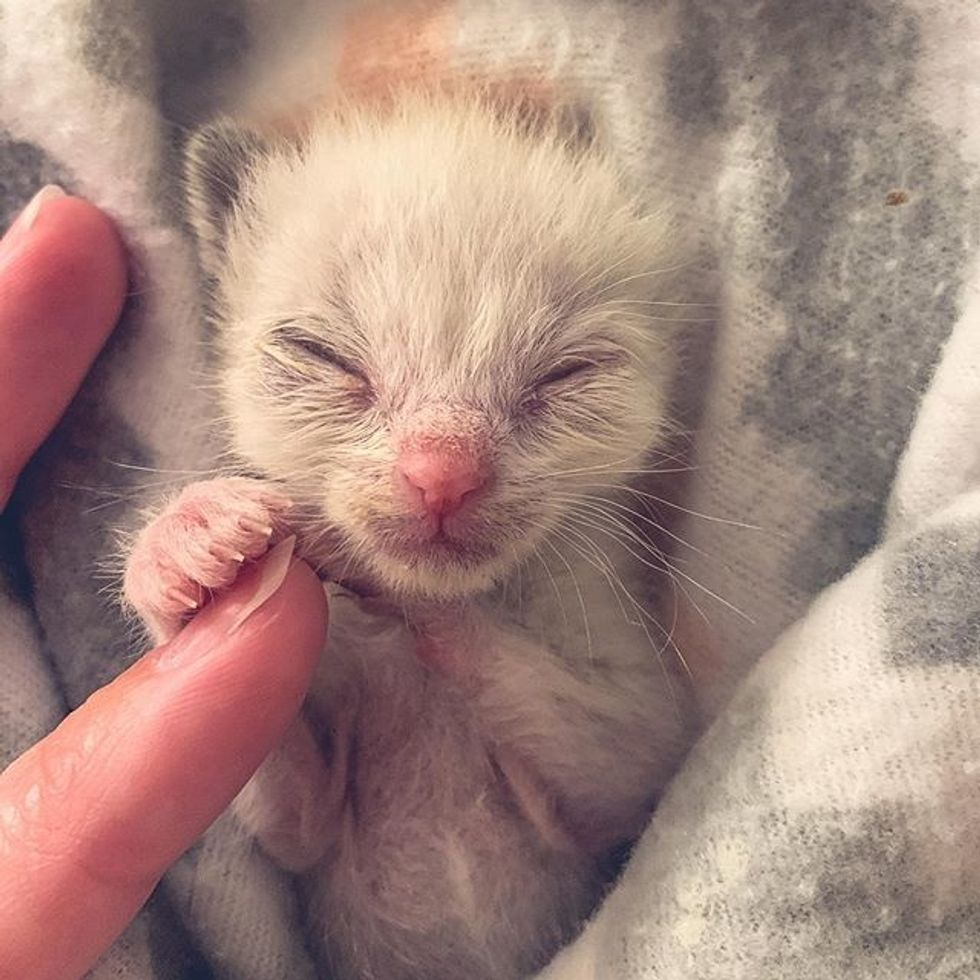 cute, kitten, tiny, small, paws
