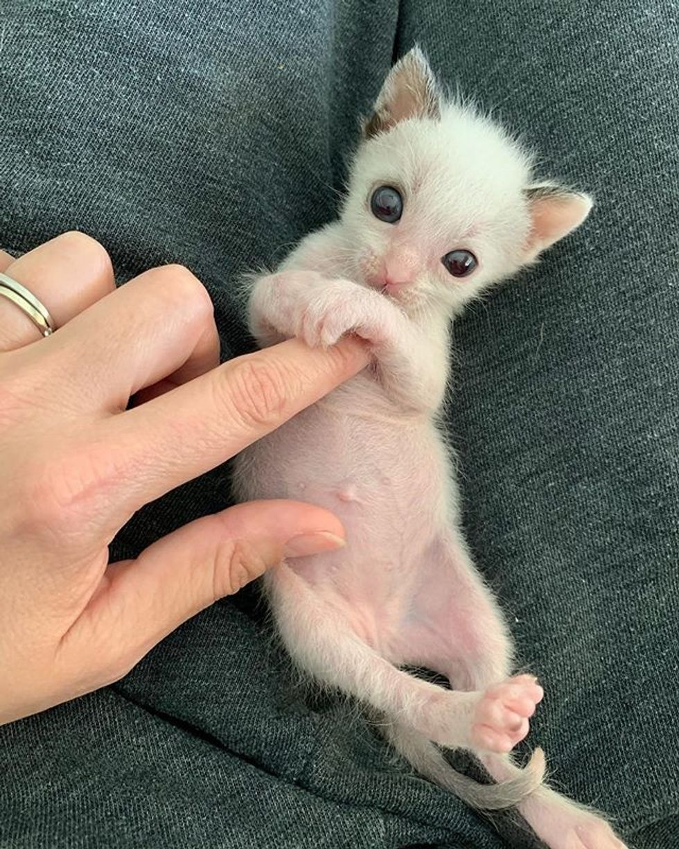 cute, kitten, tiny, small, paws, cuddle