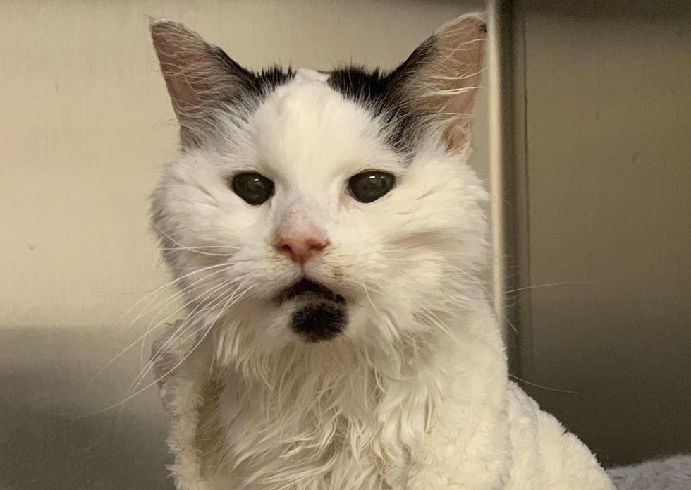cute, senior, older cat, 29, margo