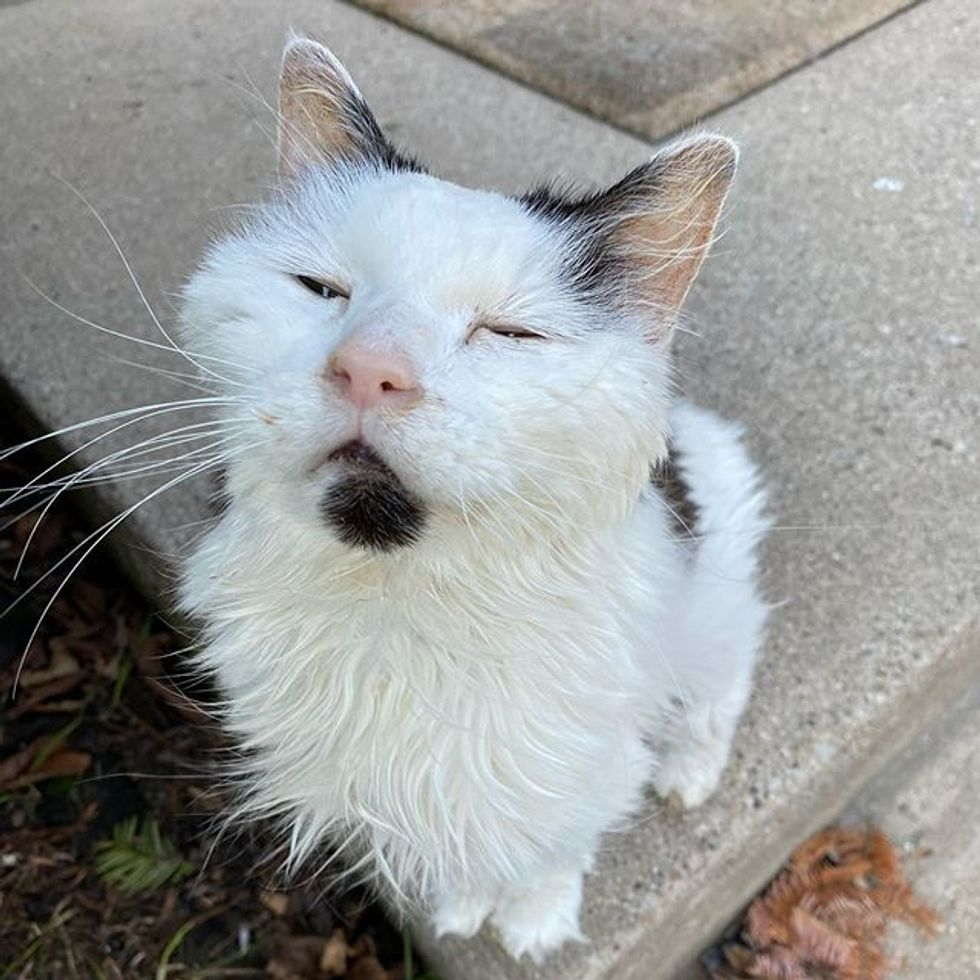 img 29-Year-Old Cat Has Been Family's Sweetest Companion Since They Adopted Her Decades Ago
