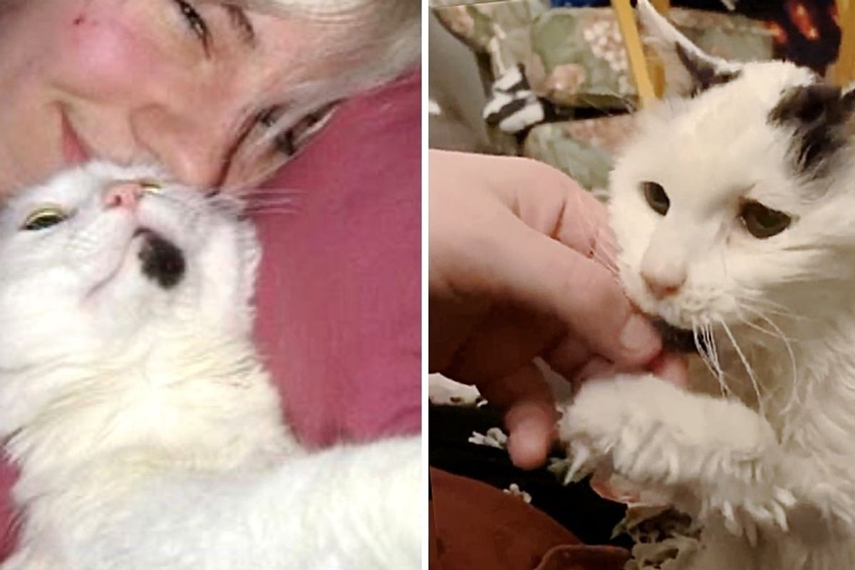 29-Year-Old Cat Has Been Family's Sweetest Companion Since They Adopted Her Decades Ago