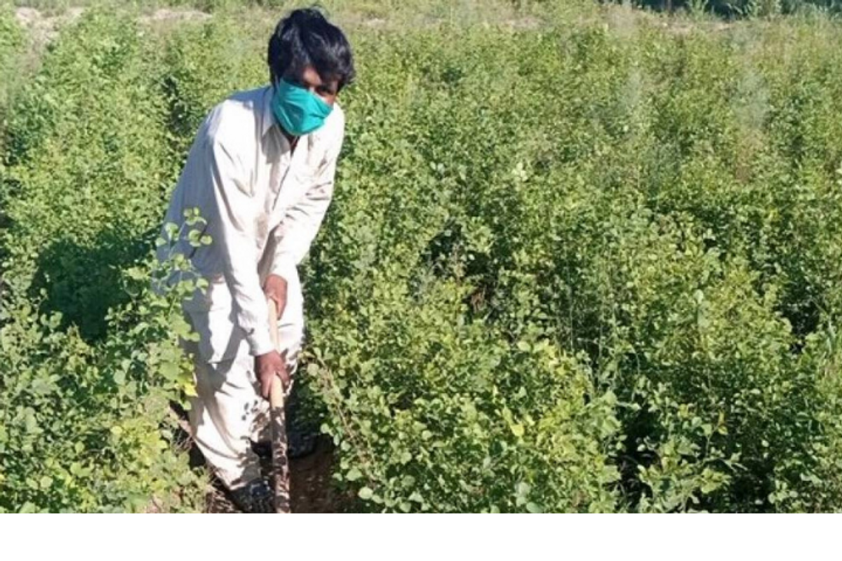 Pakistan hired 63,000 people, unemployed by COVID-19, to help plant 10 billion trees