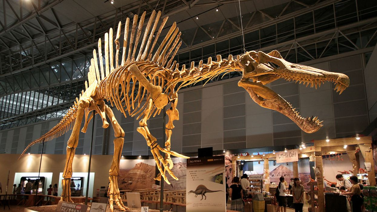 New fossils reveal first known swimming dinosaur