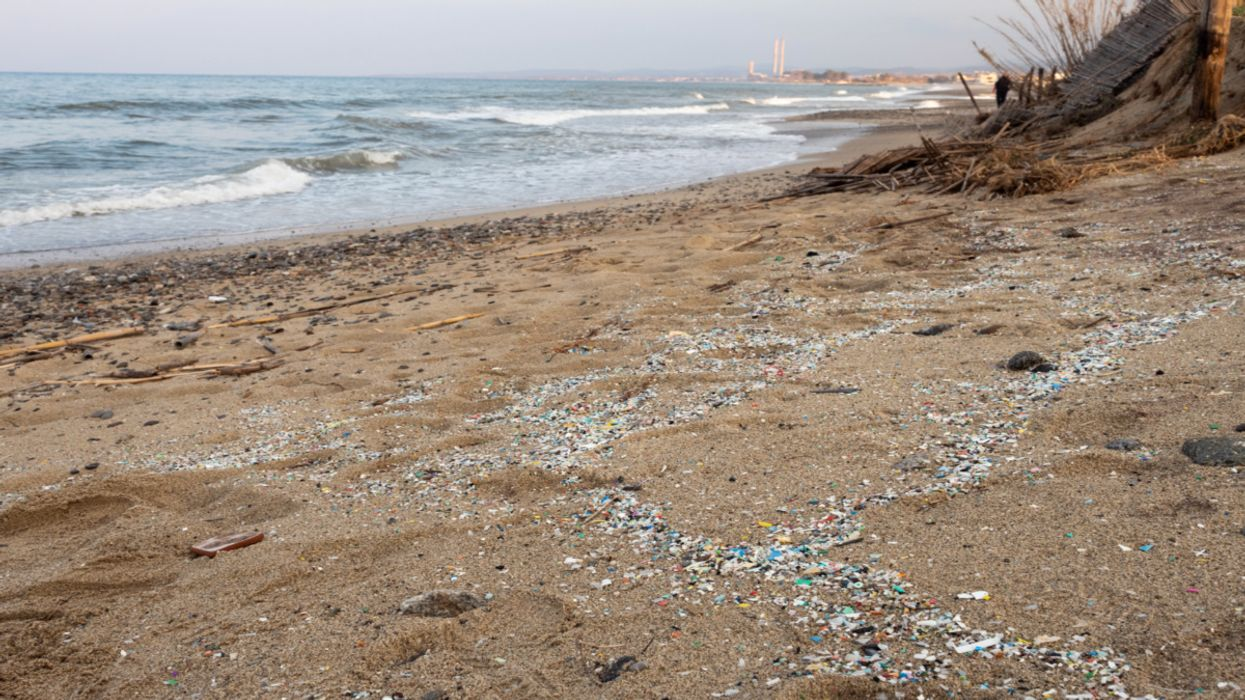 Scientists Discover Highest Concentration of Deep-Sea Microplastics to Date