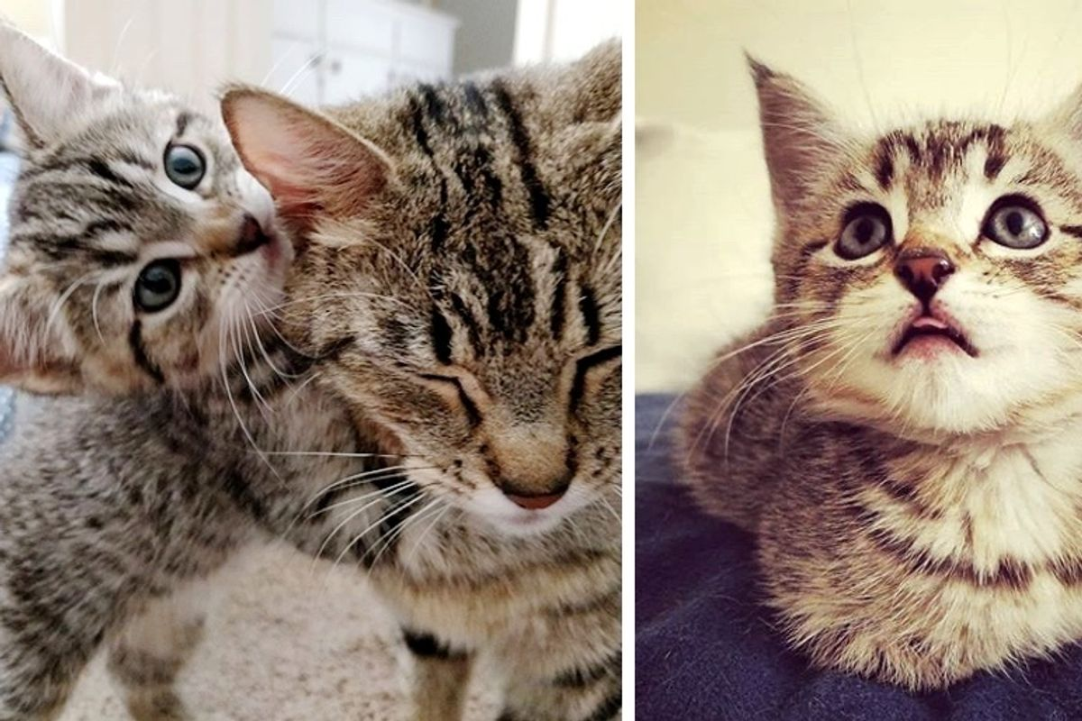Family Comes to Adopt a Kitten but Can't Leave Her Cat Mom Behind
