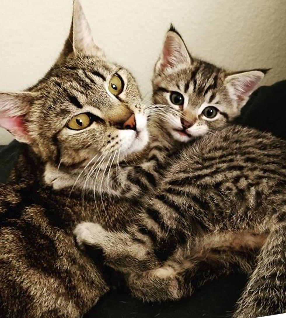 cute, cat, kitten, tabby, hug, cuddle