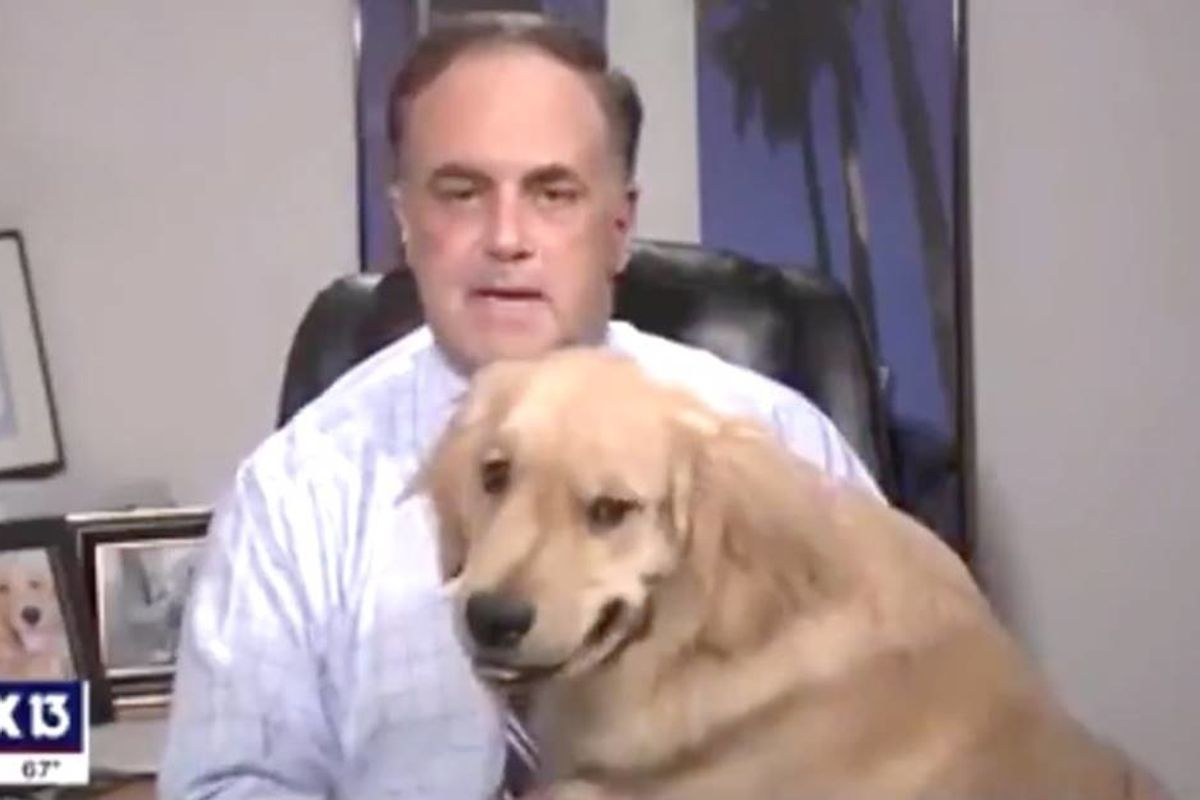 Adorable Golden Retriever interrupts meteorologist's weather forecast and he deserves all the treats