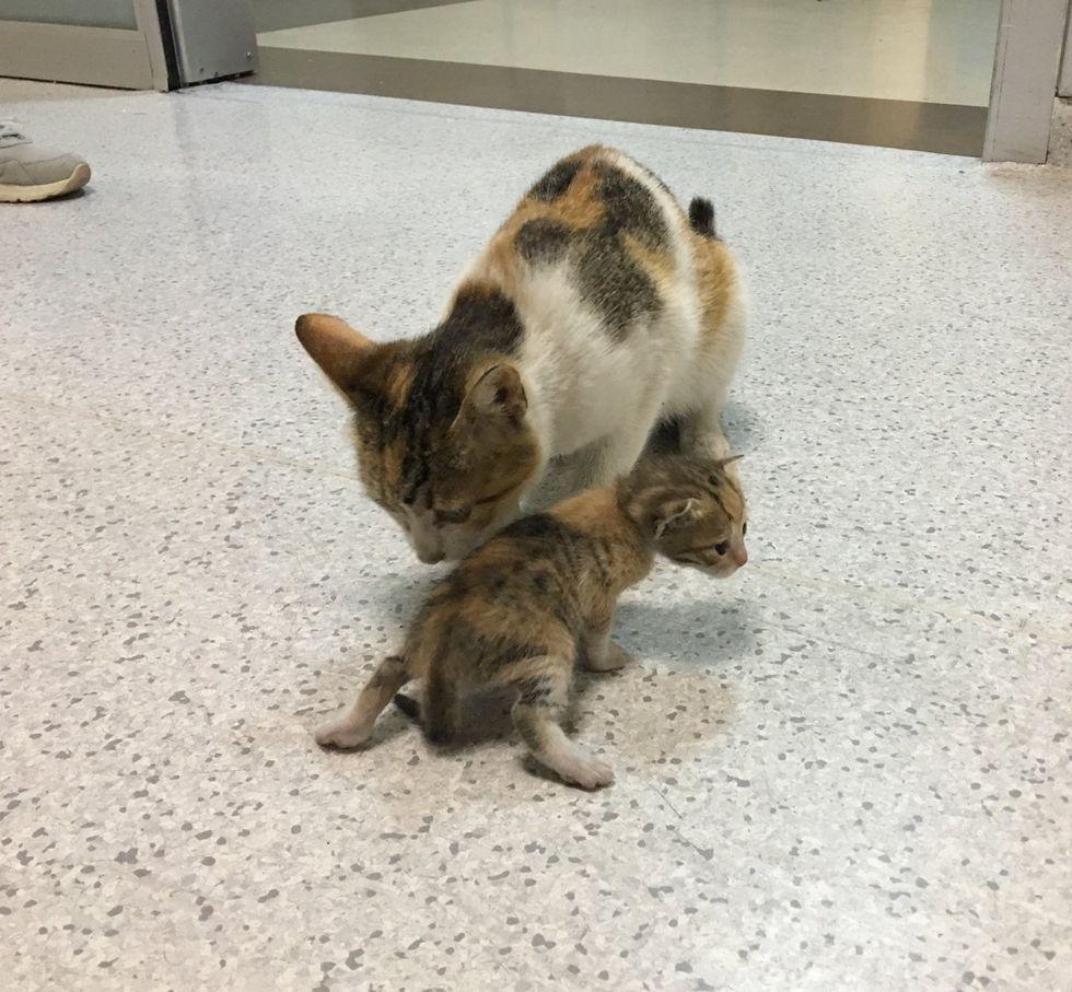cat, kitten, hospital, ER, emergency room, Istanbul