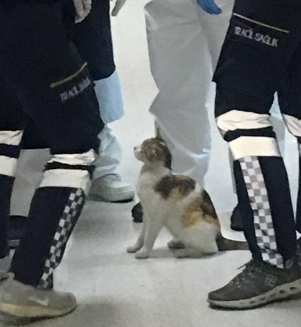 cat, kitten, hospital, ER, emergency room, Istanbul, doctors