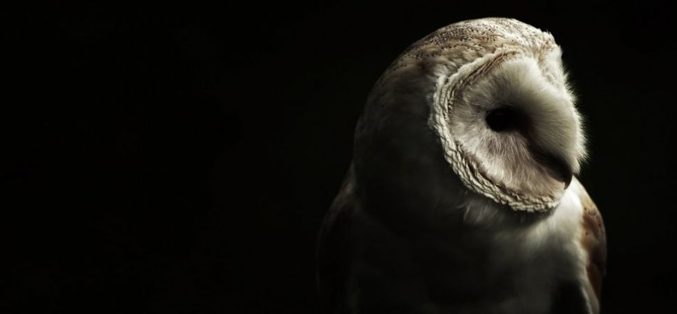 Why Being a Night Owl is Bad For Your Mental Health