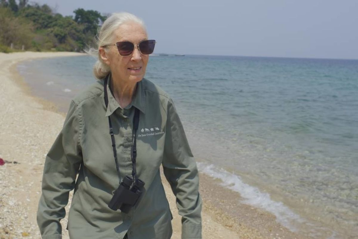 GOOD10 // The Earth Issue // The Activist: Dr. Jane Goodall
