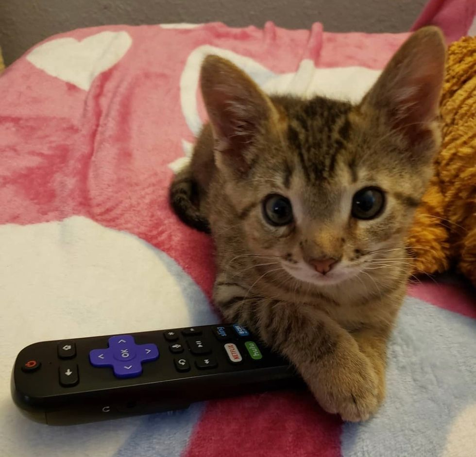 tabby, cute, kitten, tiny, remote