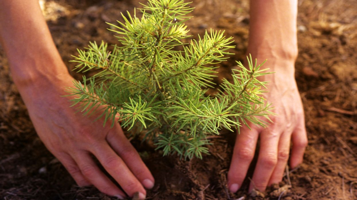 How to Plant a Tree From Home on Arbor Day