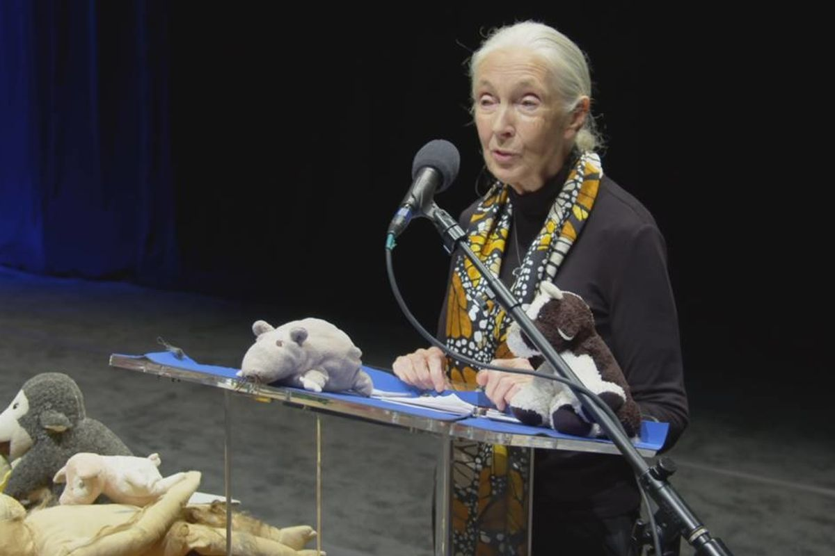 GOOD10 // The Earth Issue // The Media: National Geographic's 'Jane Goodall: The Hope'