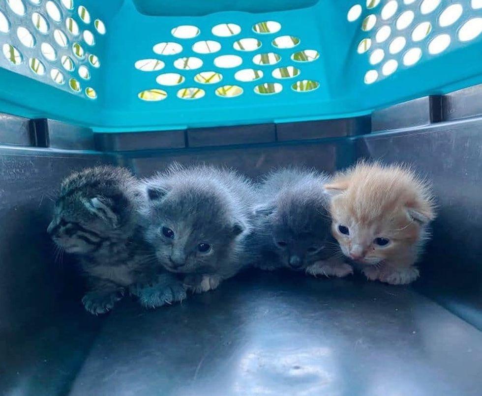 kittens, rescue, litter