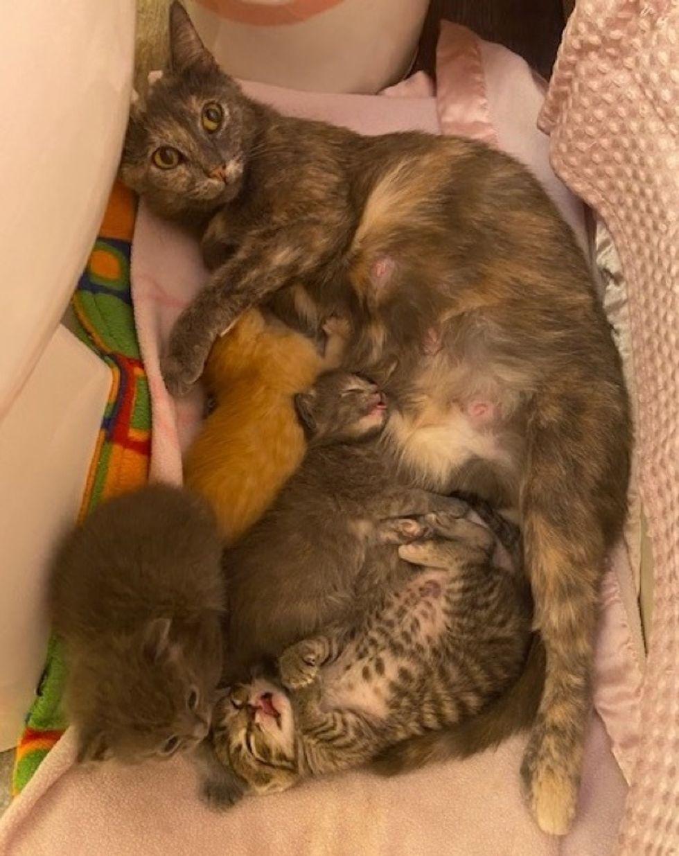 cat mom, kittens, foster