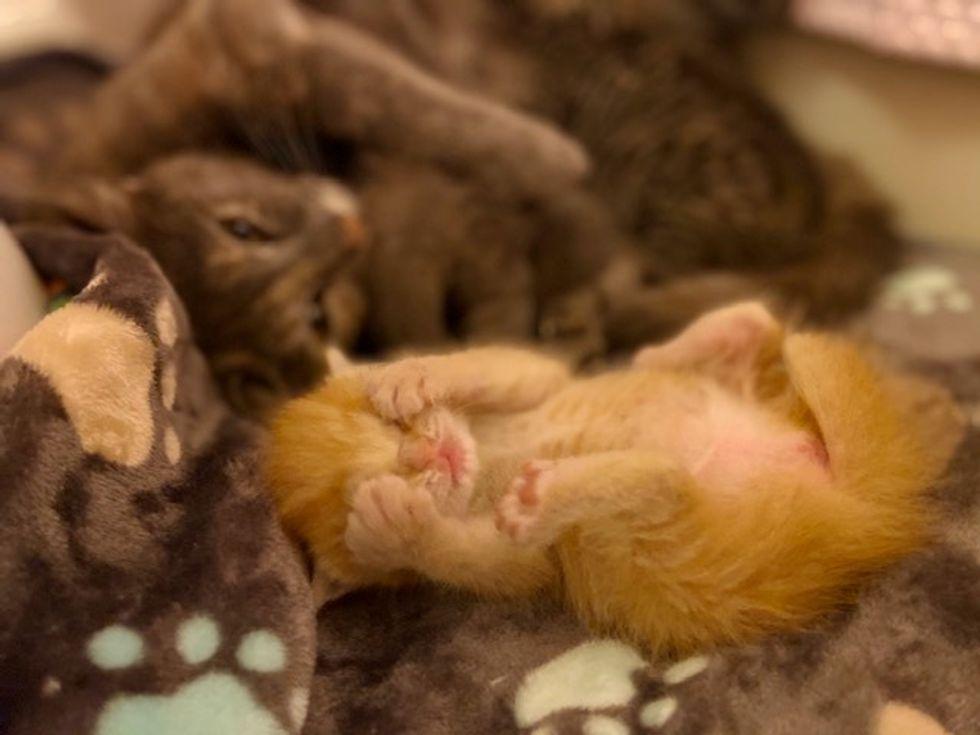 kitten, cat, mom, cute