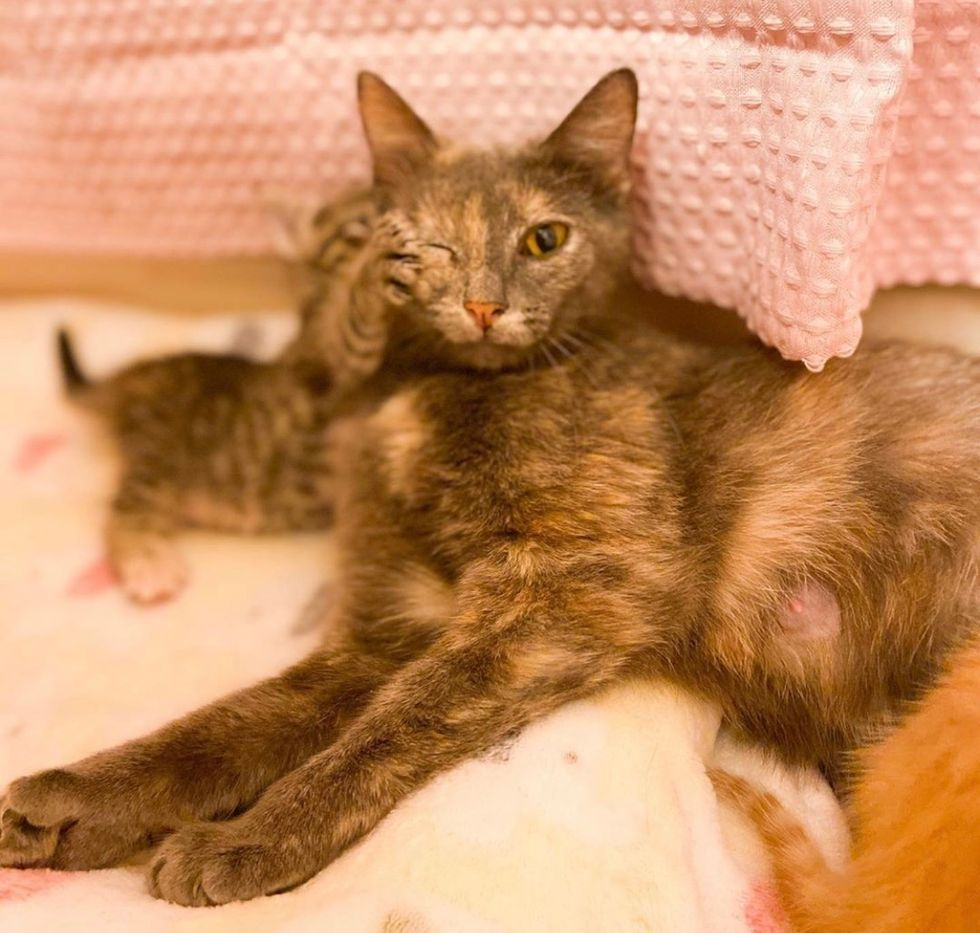 cat, kitten, cute, paw