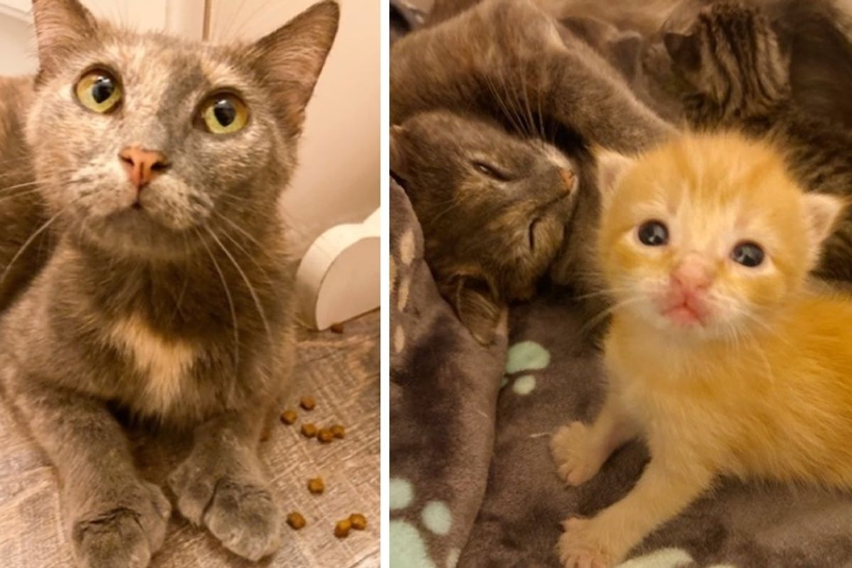 Stray Cat and Her Kittens with Extra Toes Are so Happy to Be Off the Streets