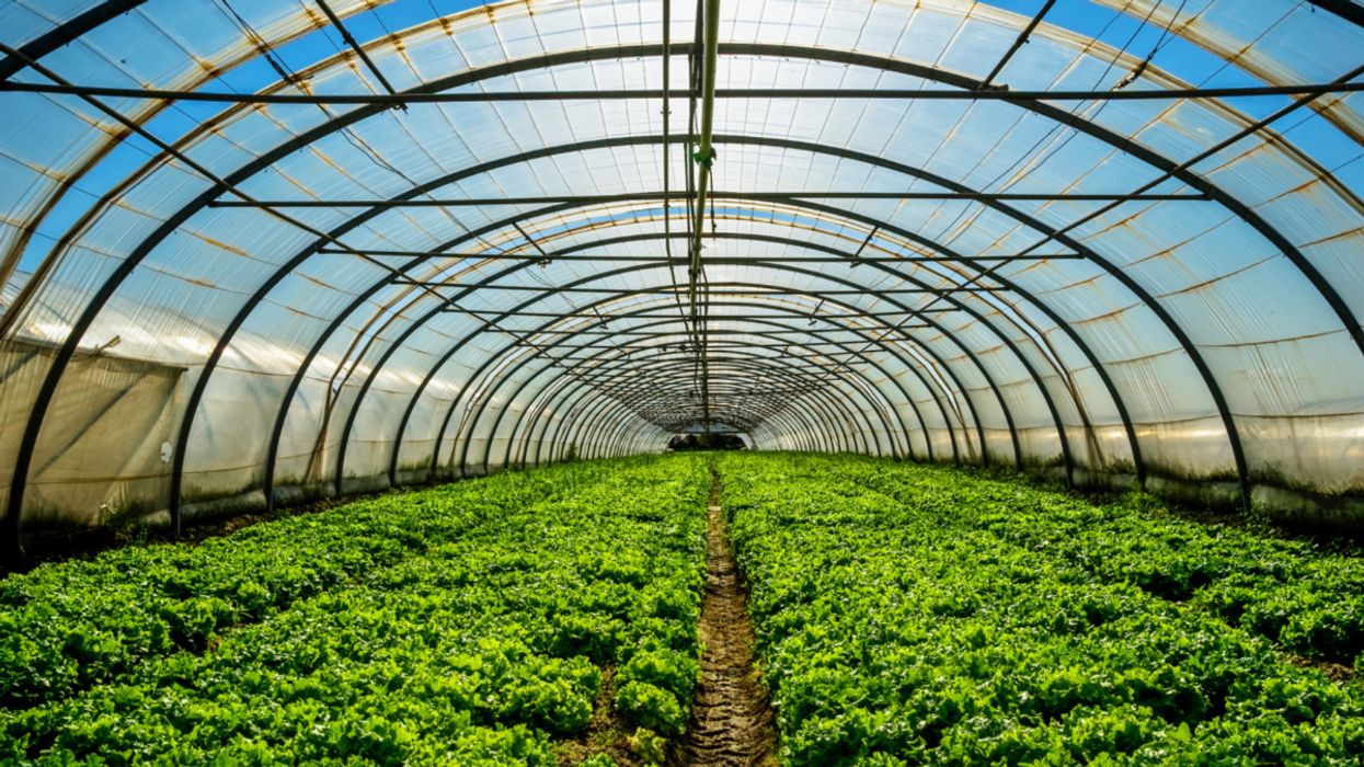 Researchers Aim to Reduce the Energy Footprint of Indoor Farms