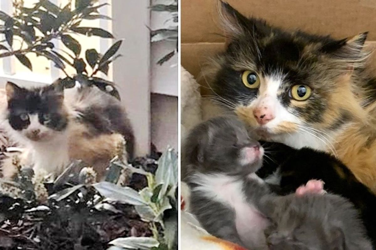 Stray Cat Wouldn't Accept Help Until Woman Found Her Kittens