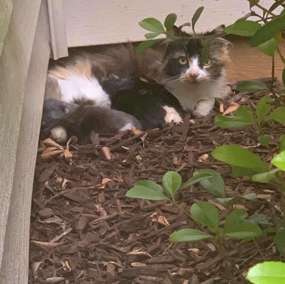 calico, stray, cat, kittens