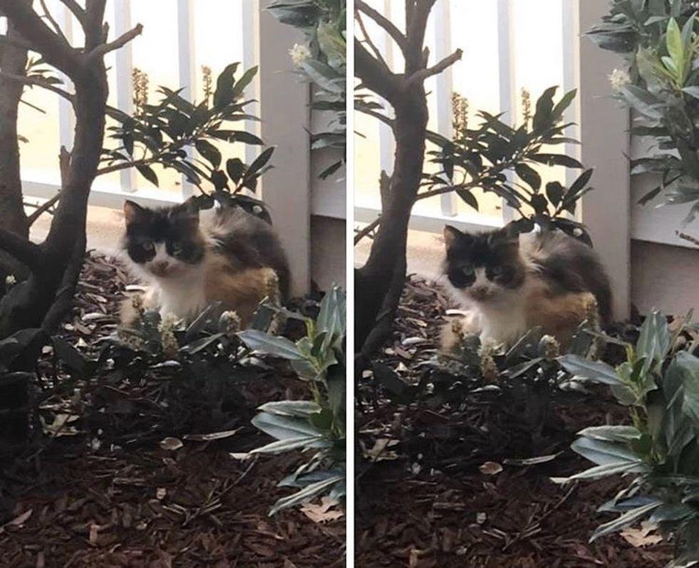calico, stray, cat